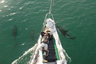 Jean et les dauphins